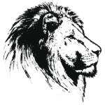 Löwe seitlich
