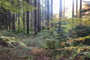Warum Waldbaden mehr als nur spazieren gehen ist